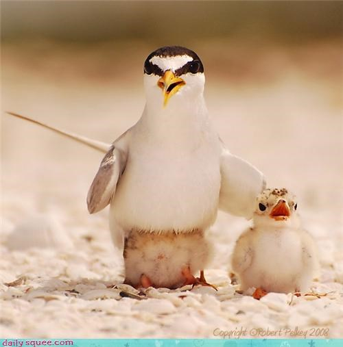 bird chicks family mom mothers day - 4402238976
