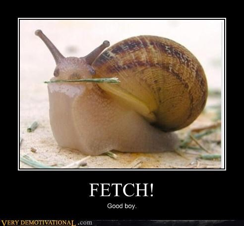 animal fetch good boy snail