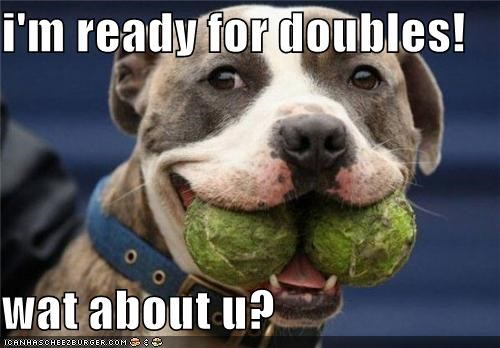 ball,balls,doubles,excited,pit bull,pitbull,question,ready,tennis