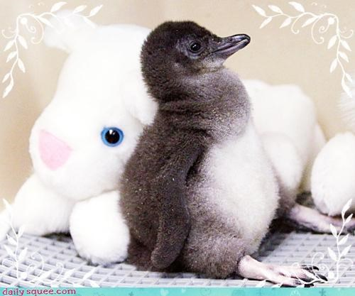baby,blorpy,chick,penguin,toy