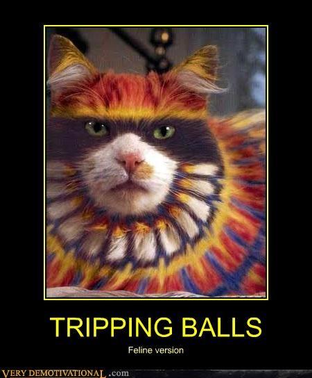 cat wtf drugs paint - 4404563712