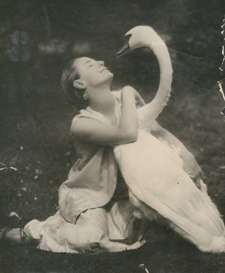 swan russia ballet funny - 4404741