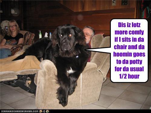 Cheezburger Image 4404793344