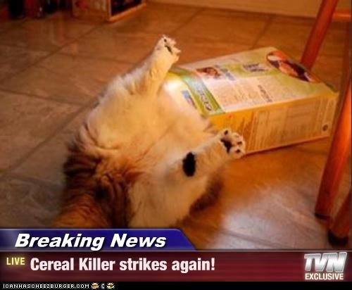 again box caption captioned cat cereal Hall of Fame homophone pun serial serial killer strikes striking stuck tabby - 4405028864