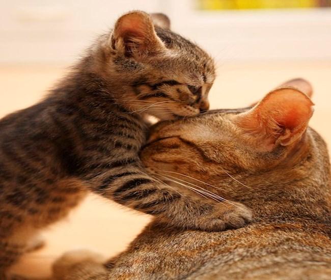 cute love funny animals - 4405509