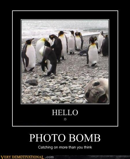 photobomb,seal,penguin,catching on