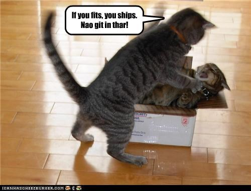 best of the week box caption captioned cat Cats Command conditional fighting fit get Hall of Fame if in motto ship shipping there - 4406317312