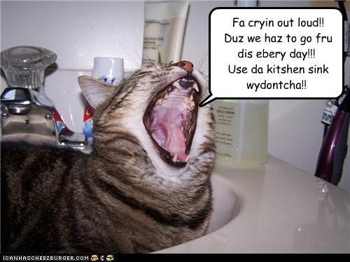 Fa cryin out loud!! Duz we haz to go fru dis ebery day!!! Use da kitshen sink wydontcha!!