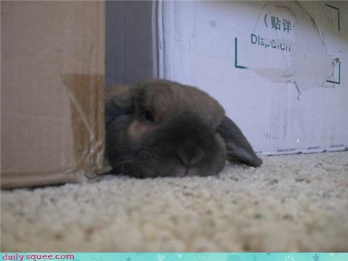 boxes,bunny,happy bunday,moving,pet,reader squeest,sleepy
