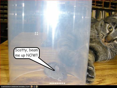 afraid beam beam me up caption captioned cat Command danger now rat Star Trek trapped urgent - 4408187648