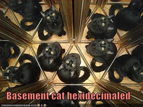 basement cat,black,caption,captioned,cat,hexidecimal,incorrect,meaning,mirrors,reflection,six,word