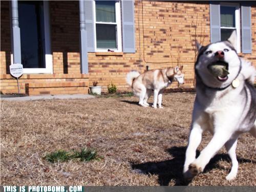 animals dogs lol photobomb poop - 4408587520