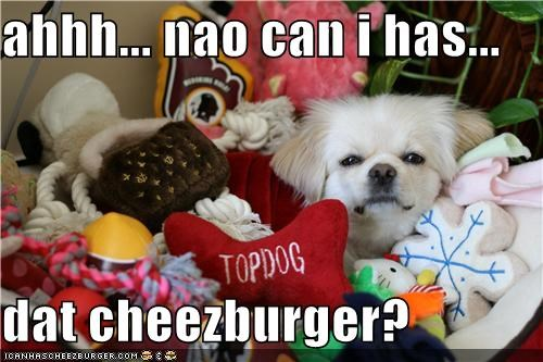Cheezburger Image 4408755200
