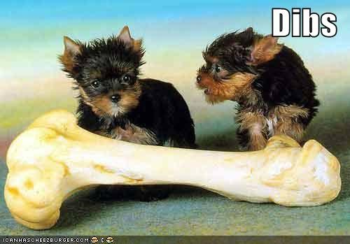 bone,claim,claiming,dibs,fighting,Hall of Fame,noms,possession,puppies,yorkshire terrier