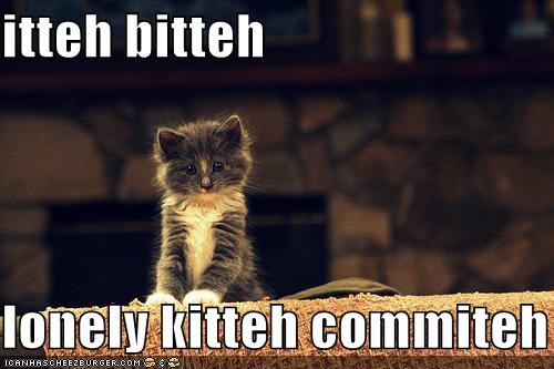 caption,captioned,cat,itteh bitteh kitteh committeh,itty bitty kitty committee,kitten,lonely,Sad,tiny