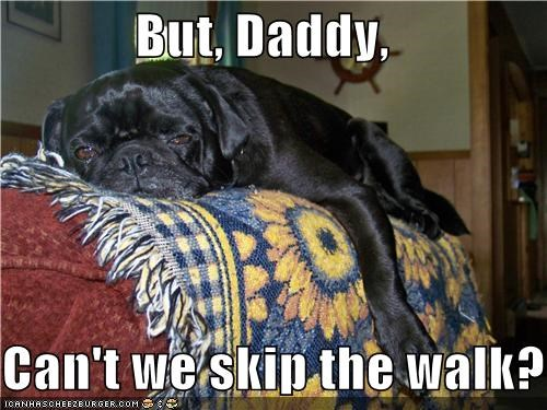 dad,do not want,lazy,moping,proposal,pug,question,skip,tired,walk,walking
