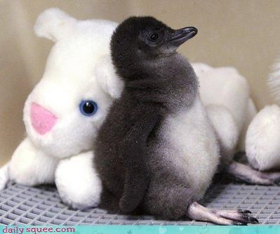 baby cute face penguin - 4409209856