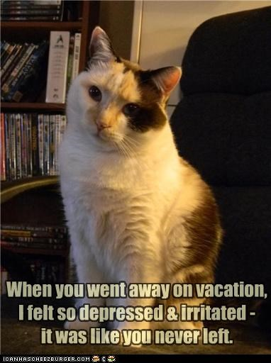 away caption captioned cat depressed going irritated sarcasm trip vacation - 4410151424