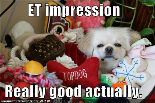 actually,doing it right,ET,good,hiding,impression,lhasa apso,really,toys