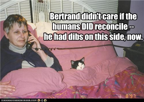 bed caption captioned cat dibs dont-care fighting humans side sleeping - 4410631680