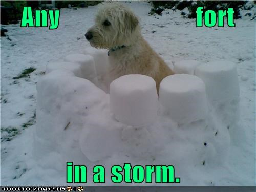 adage,any,fort,hiding,mixed breed,port,rhyme,sheepdog,shelter,snow,snow fort,storm