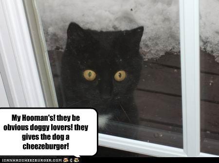 Cheezburger Image 4411255040