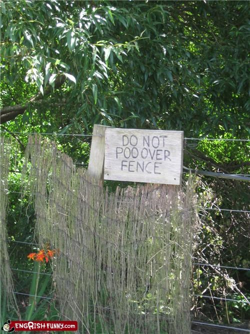 fence,poo,warning,what