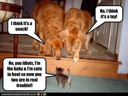 Cheezburger Image 4412091904