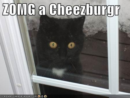 Cheezburger Image 4412248064