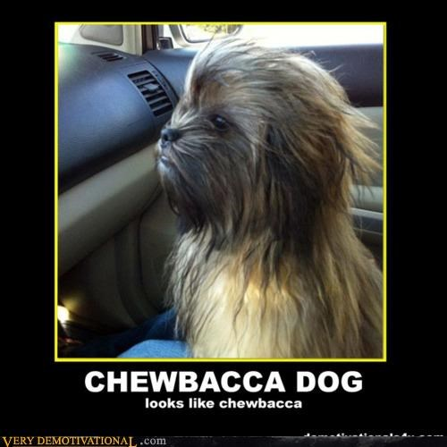 chewbacca,dogs,obvious,star wars