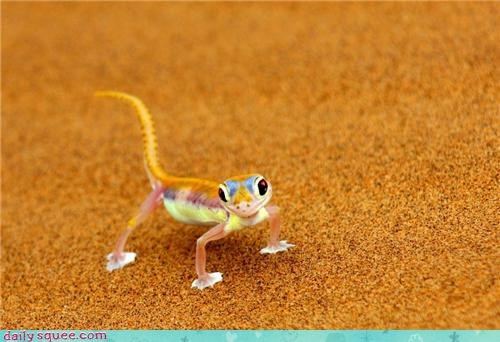 colorful desert lizard sand - 4412422656