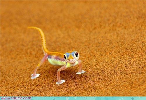 colorful desert lizard sand - 4412422656