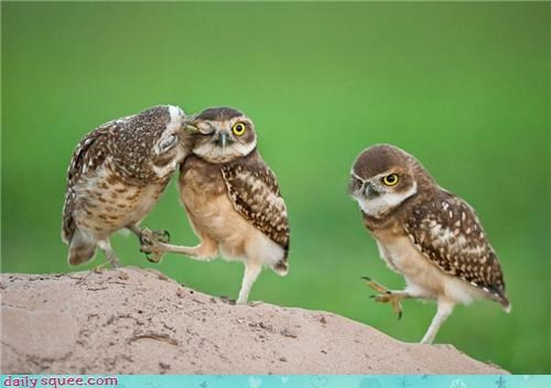birds,KISS,love,owls,peck