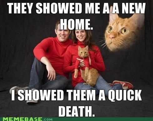 adopted animemes cat Death home Memes ptsd - 4412510976