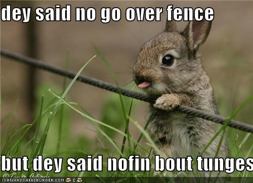 critters,defense,grass,rabbit,the fence,tongue,wire