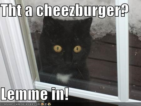 Cheezburger Image 4413004800