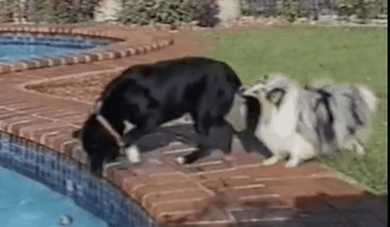 dogs gifs funny - 4413701
