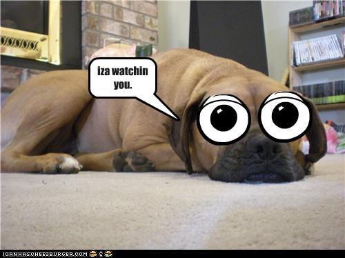 Cheezburger Image 4413989120