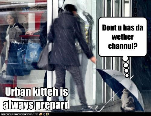 Urban kitteh is always prepard Dont u has da wether channul?