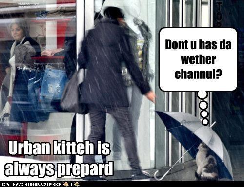 always caption captioned cat hiding prepared question umbrella urban weather channel - 4414171904