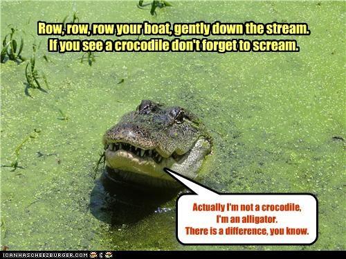 Never smile at Mr Crocodile - Cheezburger - Funny Memes