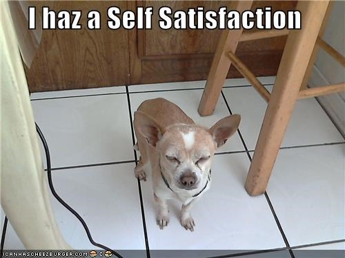chihuahua satisfaction satisfied self self-satisfaction smiling smirk smirking smug - 4414486784