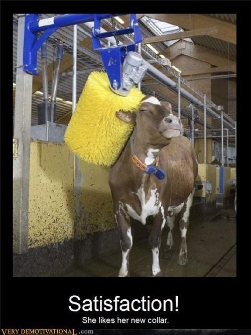wtf cow bath - 4414511872