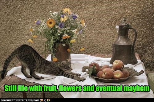 art,caption,captioned,cat,eventual,flowers,fruit,life,mayhem,posing,still,still life,table,title