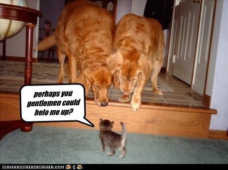 Cheezburger Image 4414597888