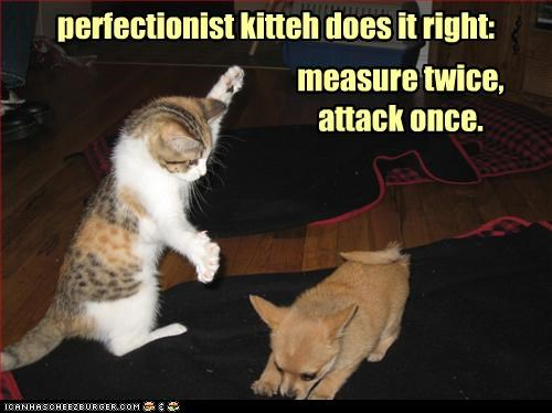 attack,attacking,caption,captioned,cat,dogs,doing it right,measure,measuring,once,perfect,perfection,perfectionism,perfectionist,puppy,twice