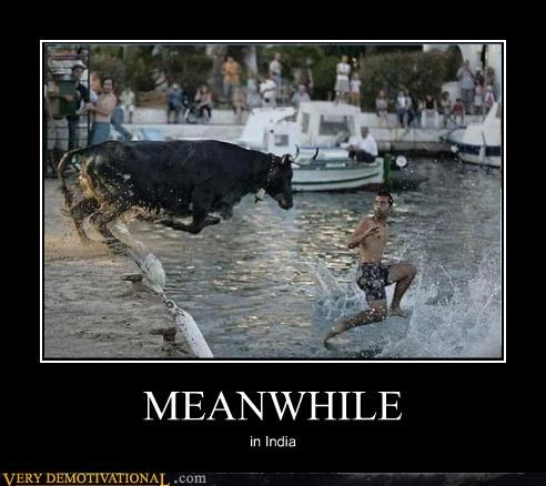 bull,india,Meanwhile,run,water,wtf
