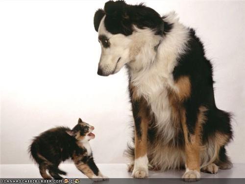 friends goggies goggies r owr friends hiss hissing Interspecies Love upset - 4415432192