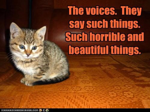 beautiful caption captioned cat crazy Hall of Fame horrible kitten such things voices