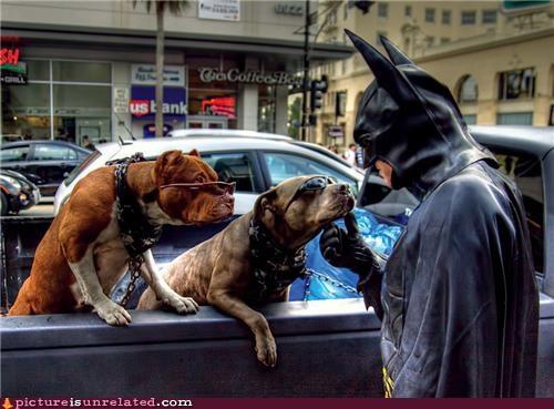 batman,dogs,gotham,IRL,LA,wtf